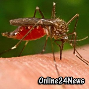 Разносчики ЛНР - комары