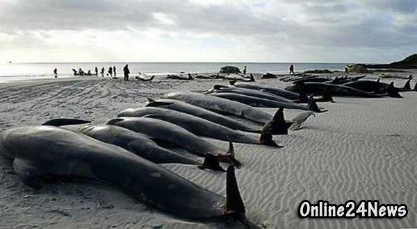 выброс дельфинов на сушу