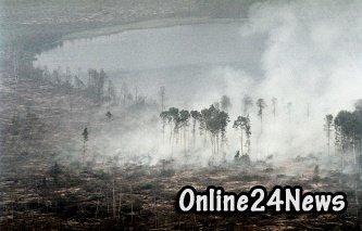 Возгорания в лесах Подмосковья могли стать причиной запаха гари в Москве