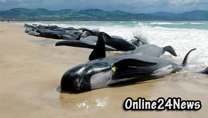 киты, выбросились на берег