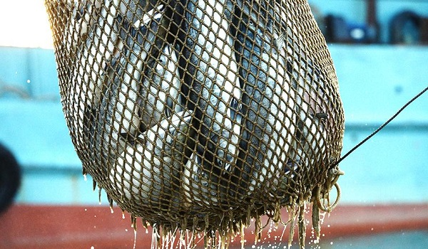 Новые правила рыбалки 2019