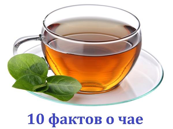 10 самых интересный фактов о чае