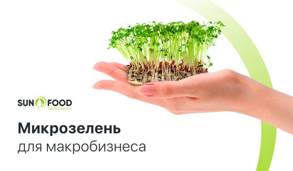 Микрозелень для макробизнеса: успех фабрика здоровья Sunfood